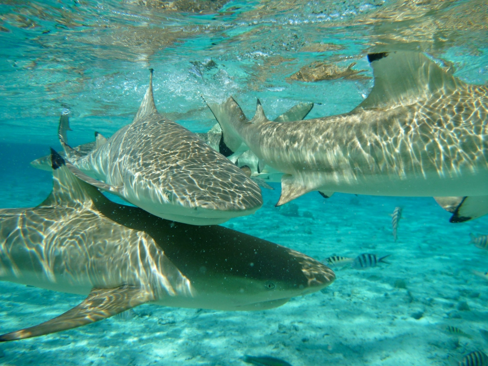 SHARK FEEDING TOUR