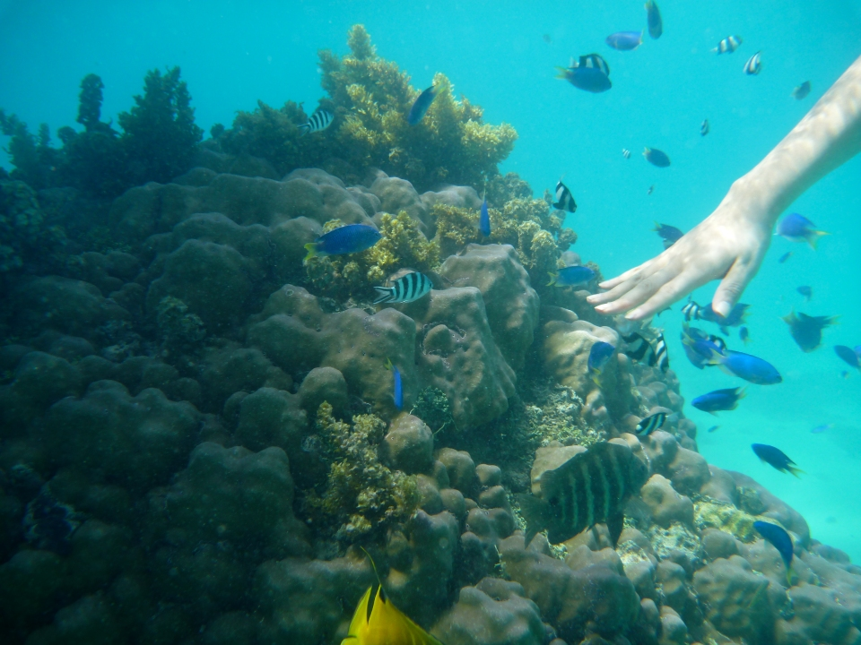 SNORKELLING OFF OUR OVERWATER BUNGALOW