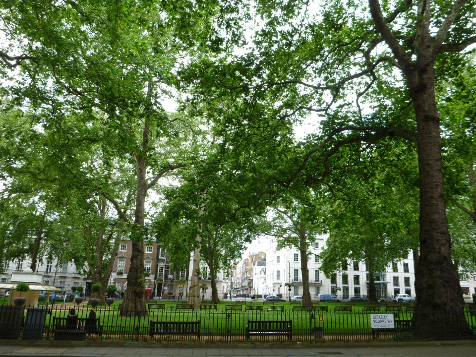 LUSH AND GREEN | BERKELEY SQUARE