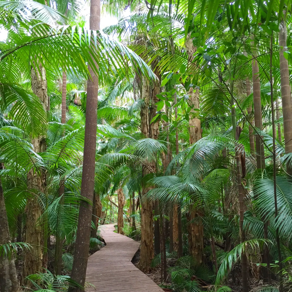 THE BYRON AT BYRON RAINFOREST