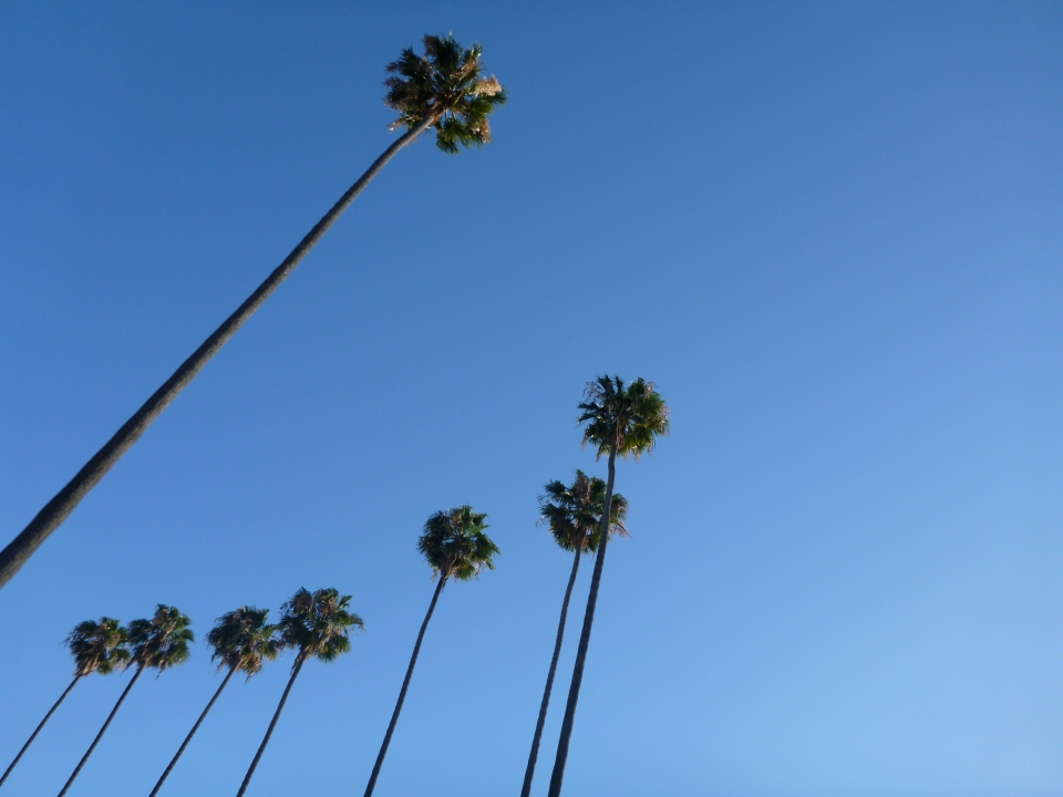 THE CITY OF PALM TREES