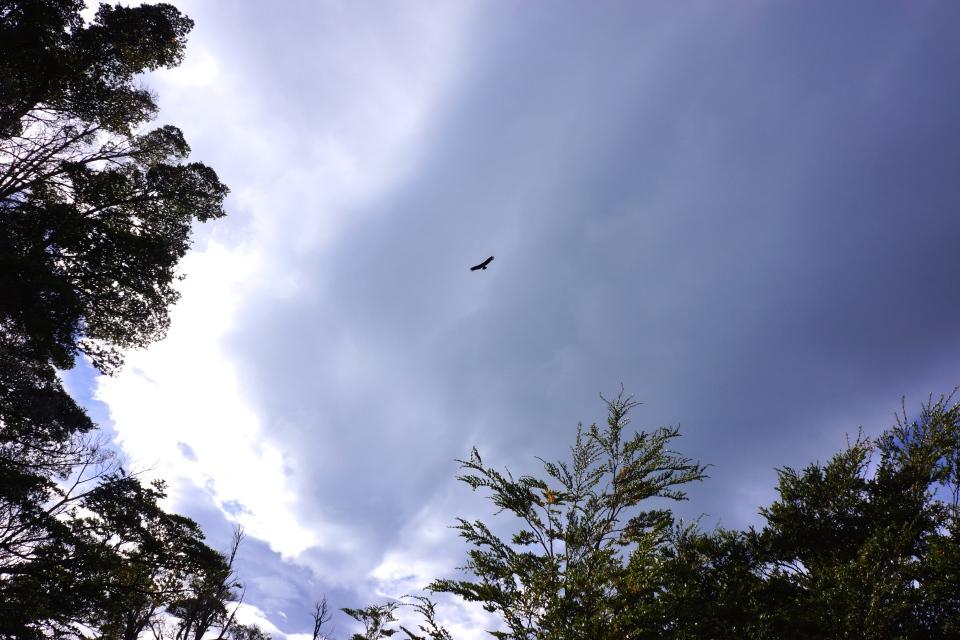 CONDOR CIRCLING AT PATAGONIA CAMP