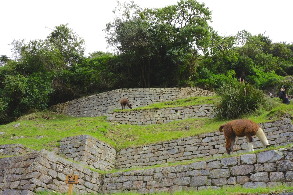WILDLIFE AT MACHU PICCHU